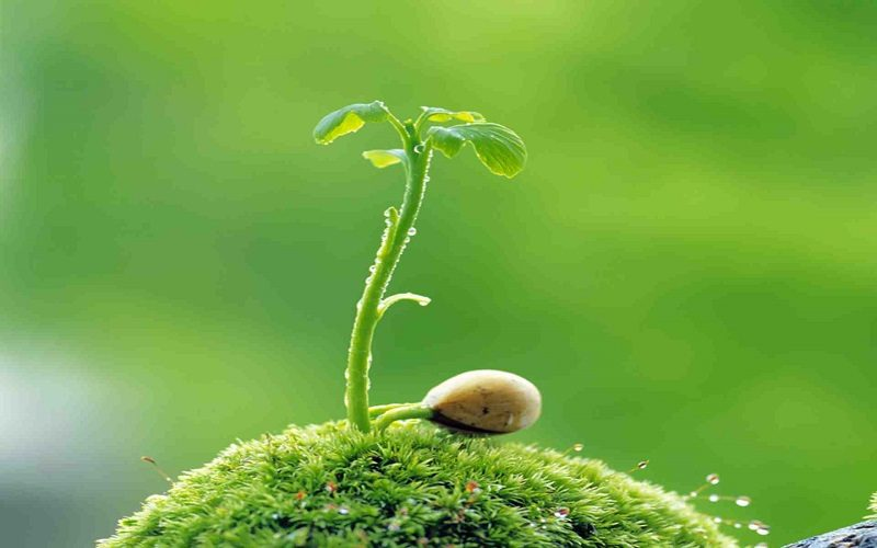 Phục hồi hồi hệ sinh thái (Ảnh nguồn Internet)